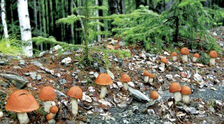 Как хранить лесные грибы