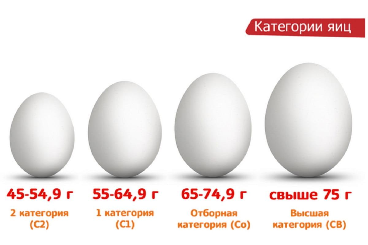 Сколько весит куриное яйцо