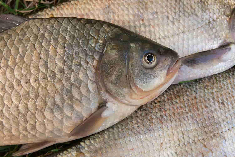 Сколько соли класть в рыбу